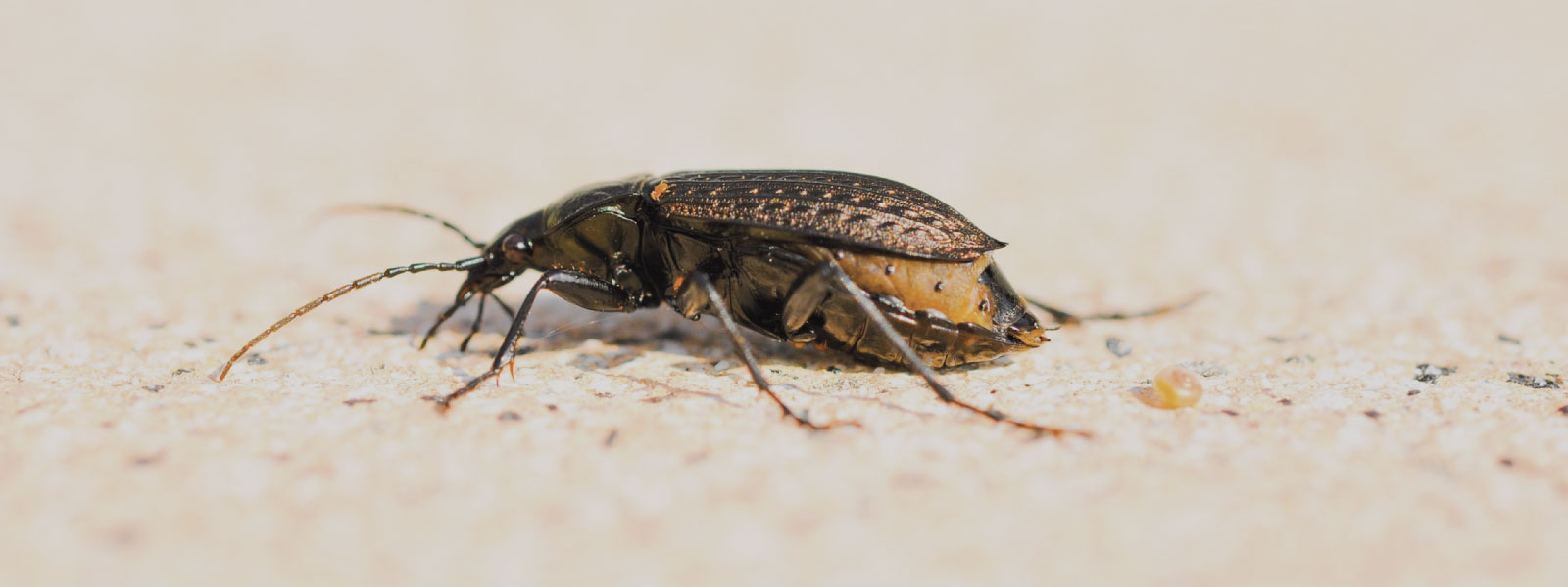 insect-exterminator-hampshire